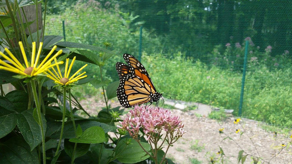 Churchville Nature Center Plant Sale