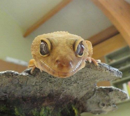 Animal Collection - Churchville Nature Center